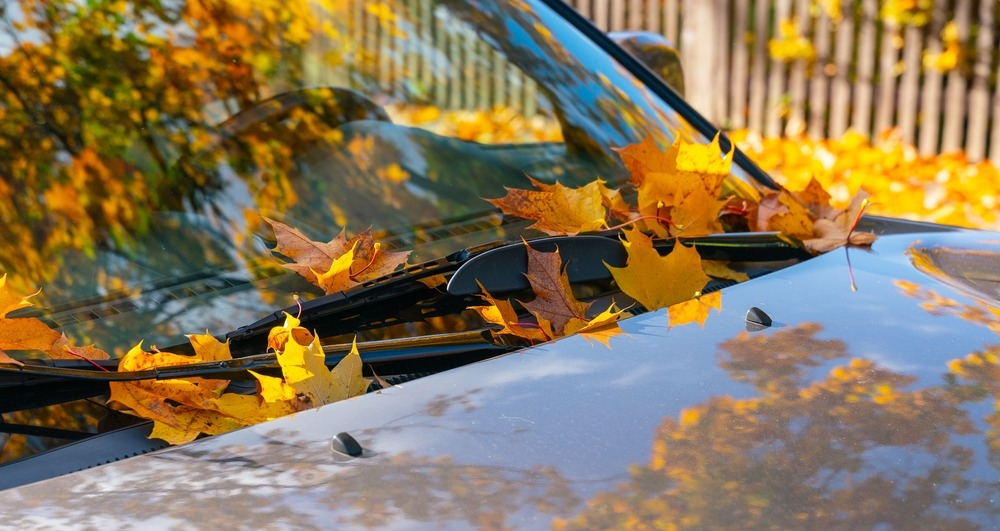 Fall Auto Maintenance, Battery, Alignment, Shocks & Struts, Tires, Wipers